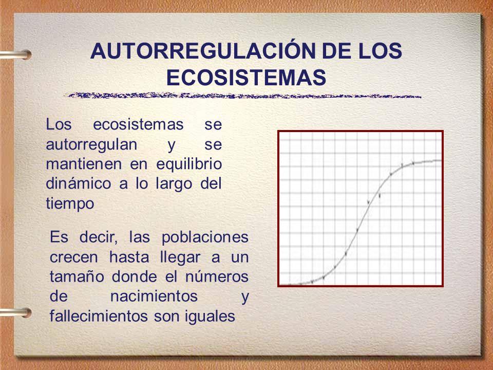 AUTORREGULACIÓN DE LOS ECOSISTEMAS Los ecosistemas se autorregulan y se mantienen en equilibrio dinámico a lo largo del tiempo Es decir, las poblaciones crecen hasta llegar a un tamaño donde el números de nacimientos y fallecimientos son iguales