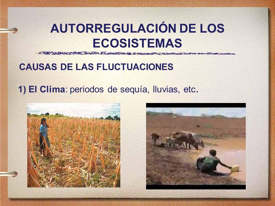 AUTORREGULACIÓN DE LOS ECOSISTEMAS CAUSAS DE LAS FLUCTUACIONES 1) El Clima: periodos de sequía, lluvias, etc.