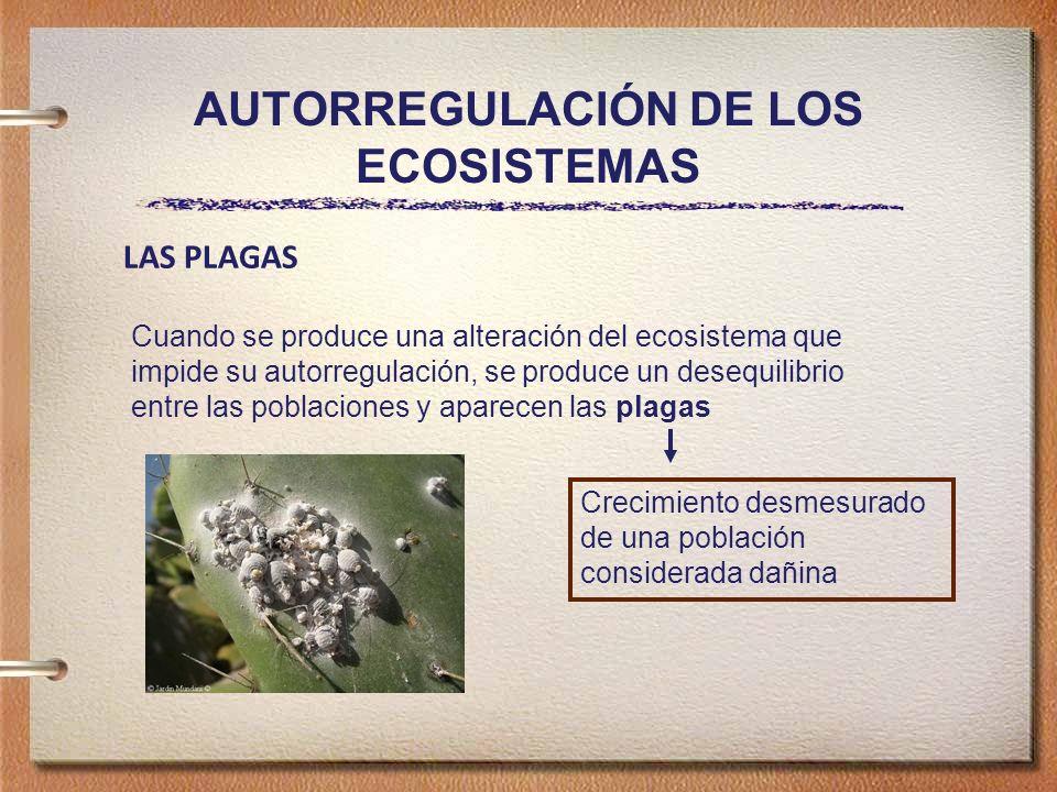 AUTORREGULACIÓN DE LOS ECOSISTEMAS LAS PLAGAS Cuando se produce una alteración del ecosistema que impide su autorregulación, se produce un desequilibrio entre las poblaciones y aparecen las plagas Crecimiento desmesurado de una población considerada dañina