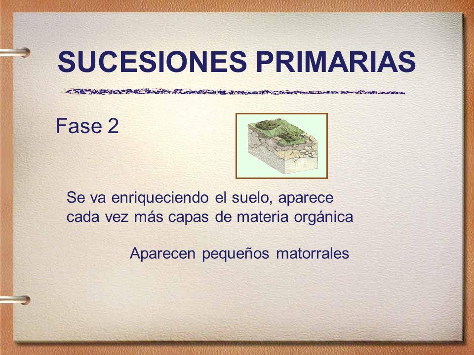 SUCESIONES PRIMARIAS Fase 2 Se va enriqueciendo el suelo, aparece cada vez más capas de materia orgánica Aparecen pequeños matorrales