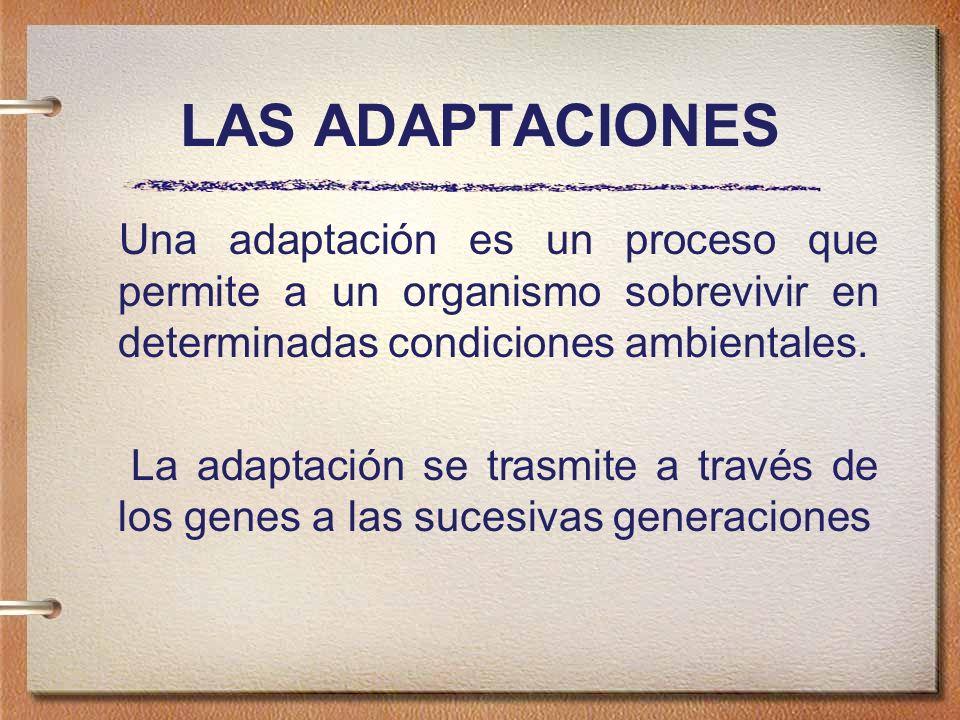 TIPOS DE ADAPTACIONES Conductuales: Cuando afectan a la conducta (tipo de respuesta ante algún estímulo)