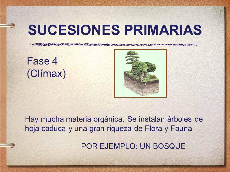 SUCESIONES PRIMARIAS Fase 4 (Clímax) Hay mucha materia orgánica.