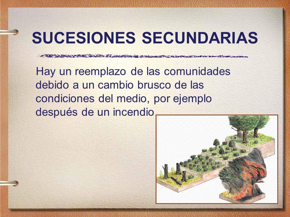SUCESIONES SECUNDARIAS Hay un reemplazo de las comunidades debido a un cambio brusco de las condiciones del medio, por ejemplo después de un incendio