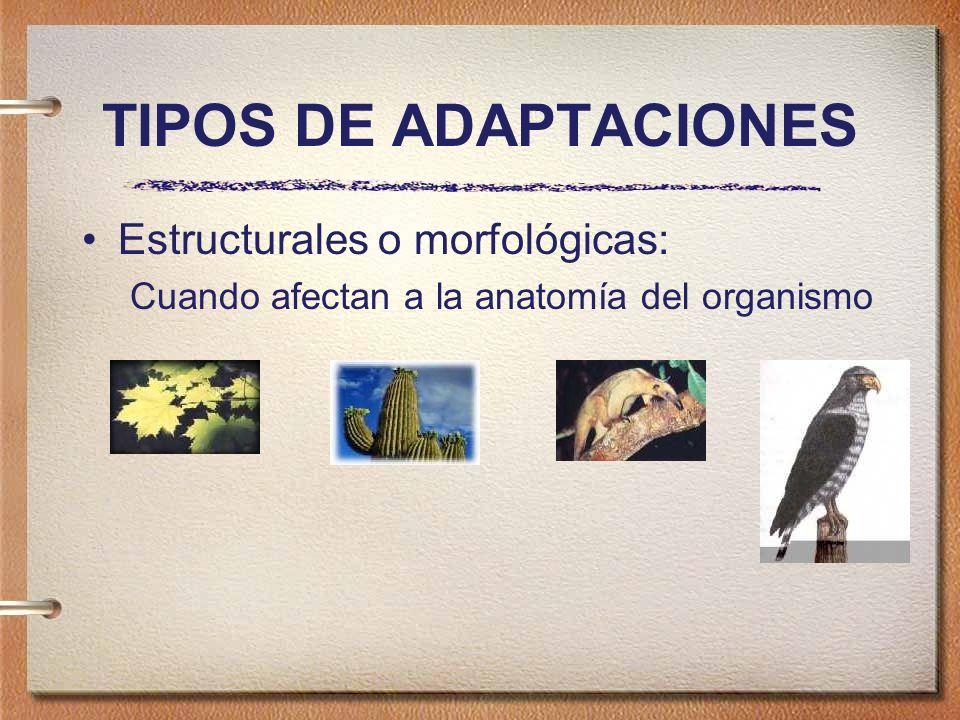 TIPOS DE ADAPTACIONES Estructurales o morfológicas: Cuando afectan a la anatomía del organismo