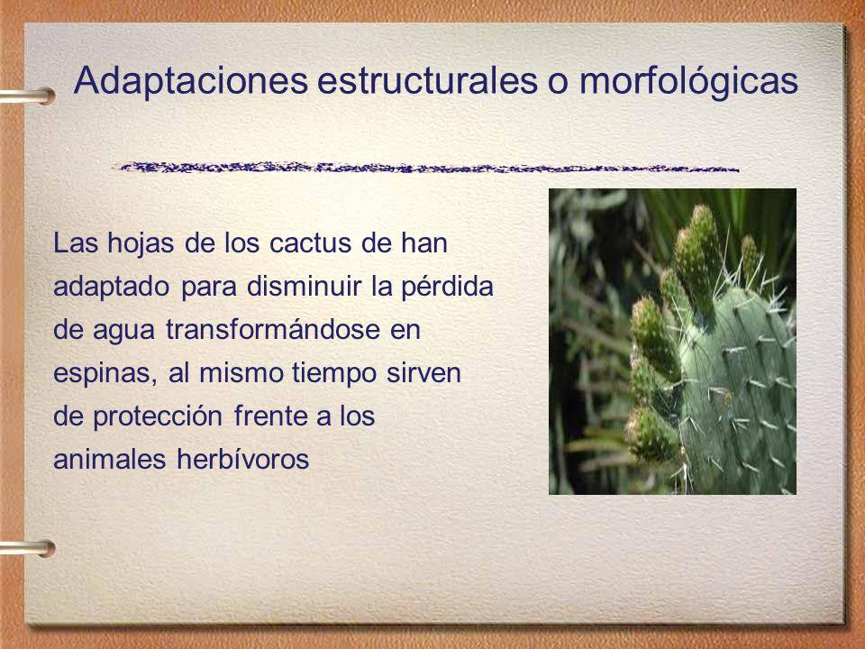 Adaptación Conductual Las plantas cambian la orientación de las hojas para captar más luz.