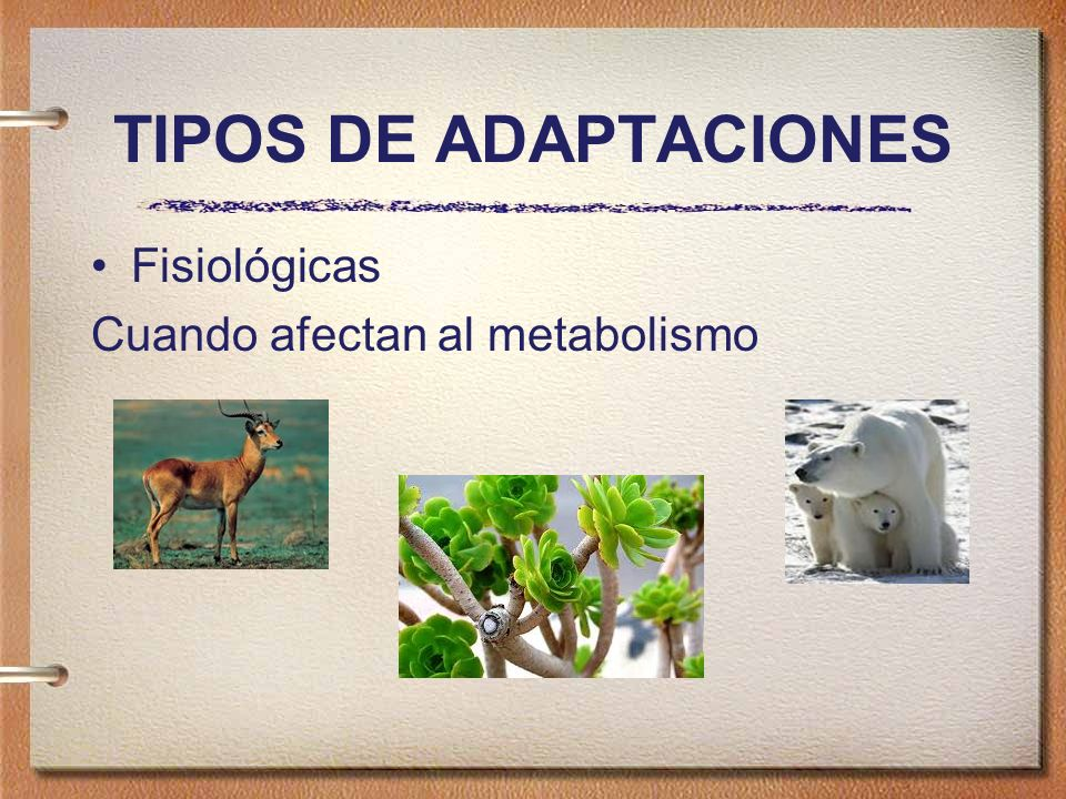 Adaptación Fisiológica Los herbívoros tienen enzimas en su estómago que los animales carnívoros no poseen, sirven para aprovechar mejor el alimento: la celulosa.