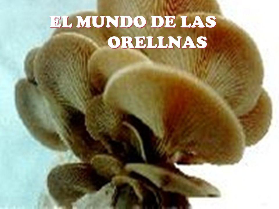 EL MUNDO DE LAS ORELLNAS EL MUNDO DE LAS ORELLNAS