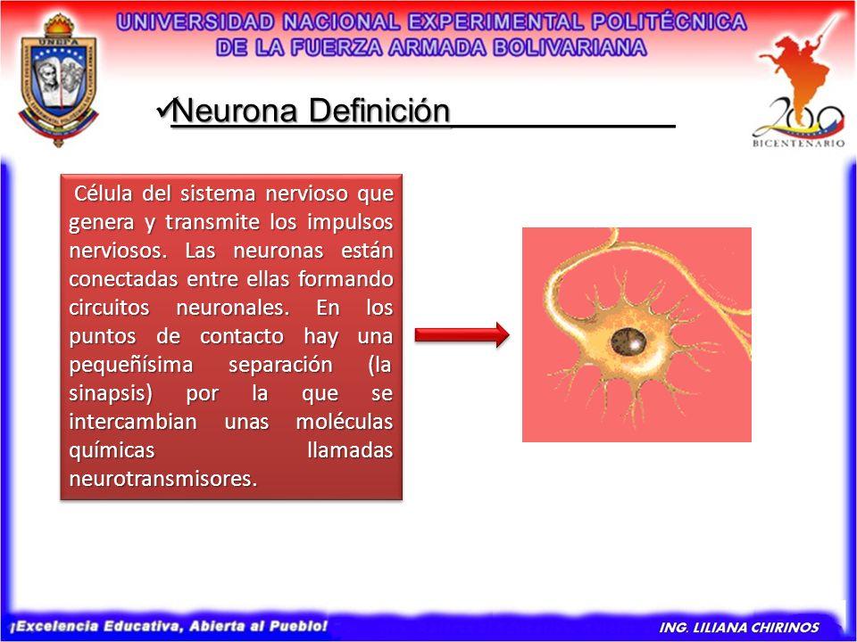 Célula del sistema nervioso que genera y transmite los impulsos nerviosos. Las neuronas están conectadas entre ellas formando circuitos neuronales. En