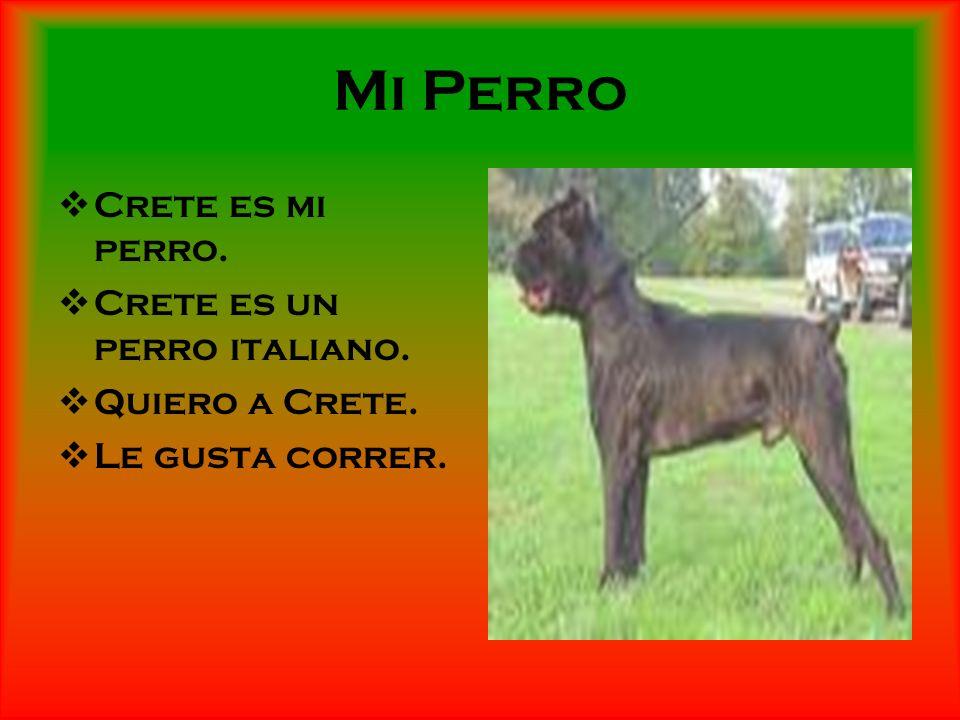 Mi Perro Crete es mi perro. Crete es un perro italiano. Quiero a Crete. Le gusta correr.