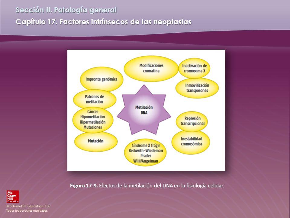 McGraw-Hill Education LLC Todos los derechos reservados. Capítulo 17. Factores intrínsecos de las neoplasias Sección II. Patología general Figura 17-9