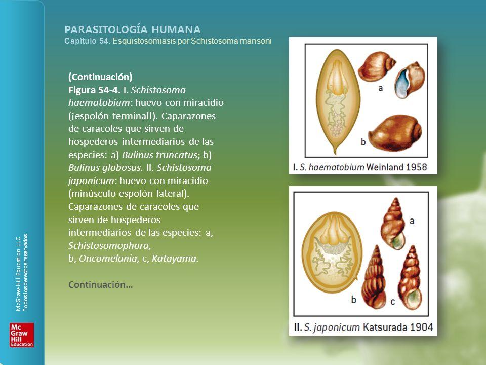 McGraw-Hill Education LLC Todos los derechos reservados. PARASITOLOGÍA HUMANA Capítulo 54. Esquistosomiasis por Schistosoma mansoni (Continuación) Fig