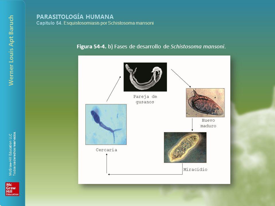 McGraw-Hill Education LLC Todos los derechos reservados. PARASITOLOGÍA HUMANA Capítulo 54. Esquistosomiasis por Schistosoma mansoni Werner Louis Apt B