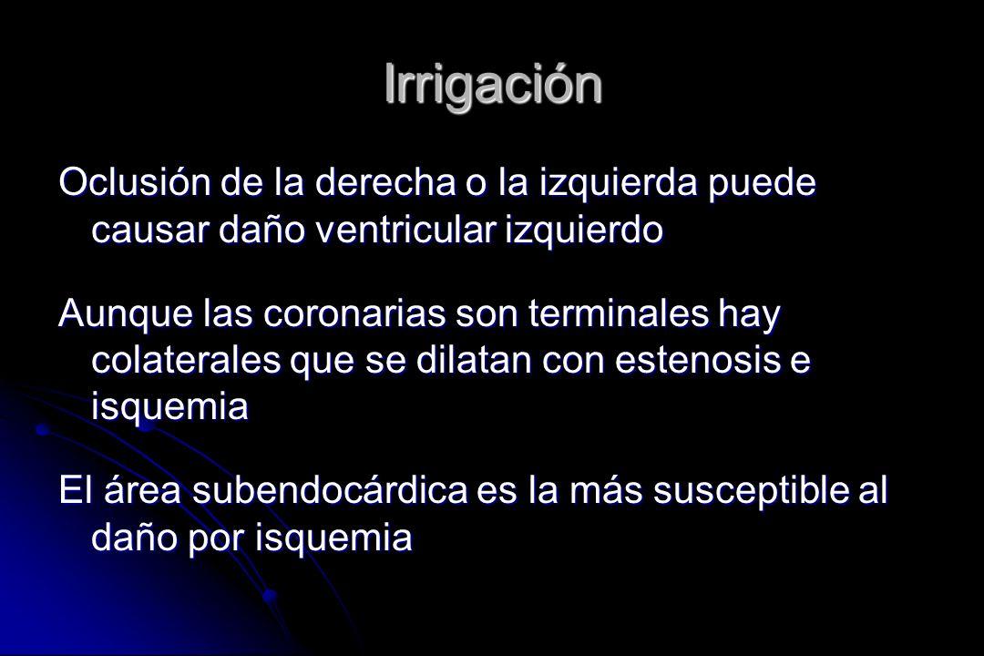 Irrigación Oclusión de la derecha o la izquierda puede causar daño ventricular izquierdo Aunque las coronarias son terminales hay colaterales que se d