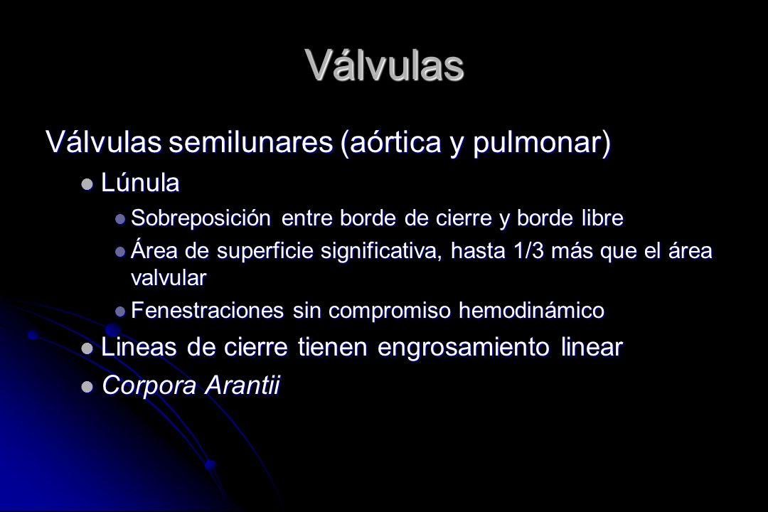 Válvulas Válvulas semilunares (aórtica y pulmonar) Lúnula Lúnula Sobreposición entre borde de cierre y borde libre Sobreposición entre borde de cierre