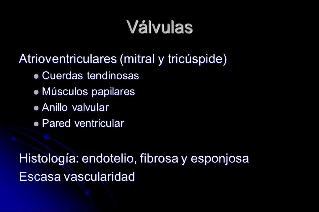 Válvulas Atrioventriculares (mitral y tricúspide) Cuerdas tendinosas Cuerdas tendinosas Músculos papilares Músculos papilares Anillo valvular Anillo v