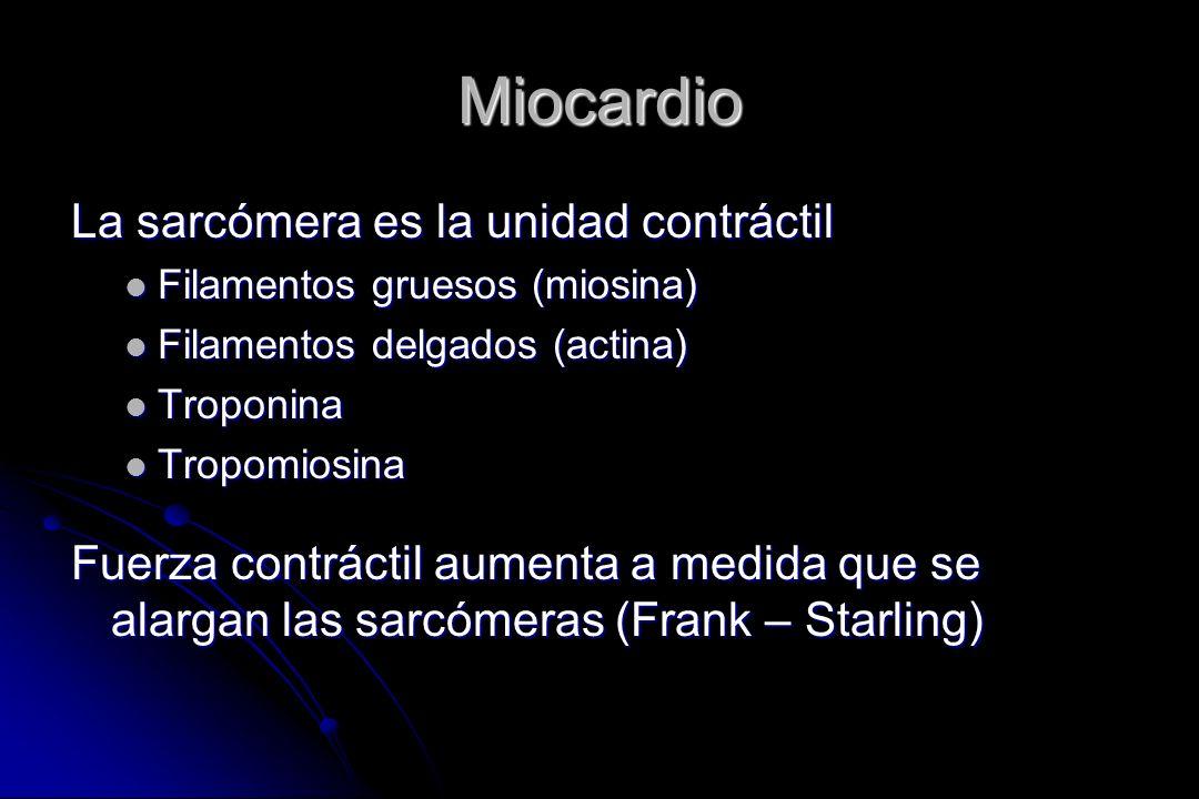 Miocardio La sarcómera es la unidad contráctil Filamentos gruesos (miosina) Filamentos gruesos (miosina) Filamentos delgados (actina) Filamentos delga
