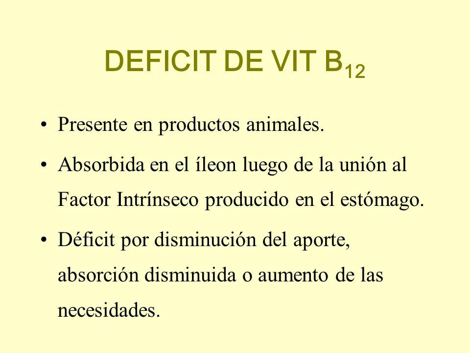 DEFICIT DE VIT B 12 Presente en productos animales. Absorbida en el íleon luego de la unión al Factor Intrínseco producido en el estómago. Déficit por