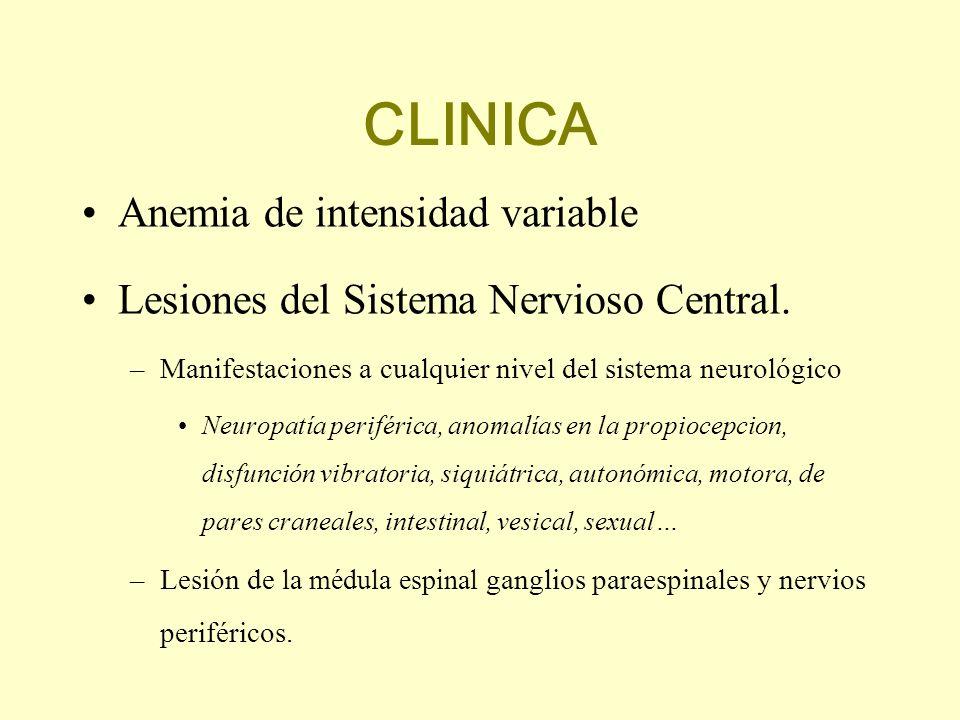 CLINICA Anemia de intensidad variable Lesiones del Sistema Nervioso Central. –Manifestaciones a cualquier nivel del sistema neurológico Neuropatía per