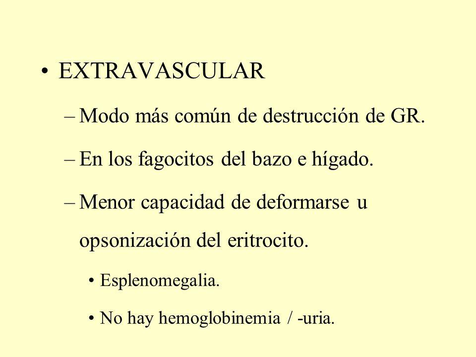 EXTRAVASCULAR –Modo más común de destrucción de GR. –En los fagocitos del bazo e hígado. –Menor capacidad de deformarse u opsonización del eritrocito.