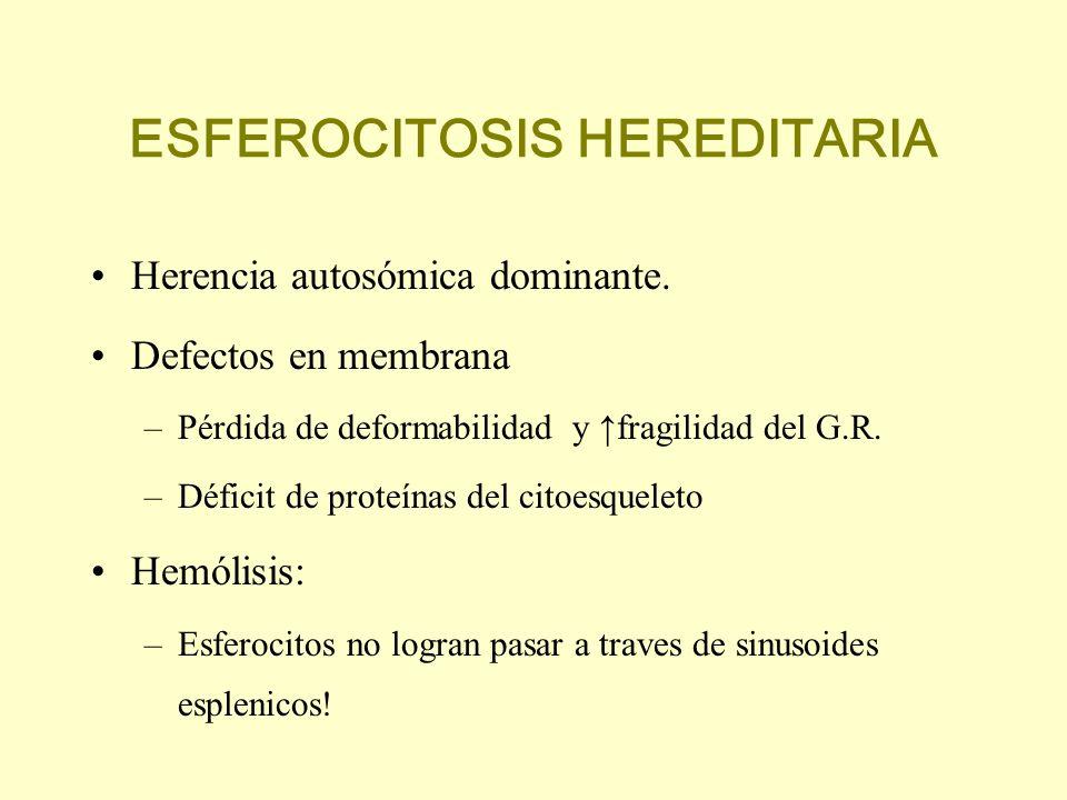 ESFEROCITOSIS HEREDITARIA Herencia autosómica dominante. Defectos en membrana –Pérdida de deformabilidad y fragilidad del G.R. –Déficit de proteínas d