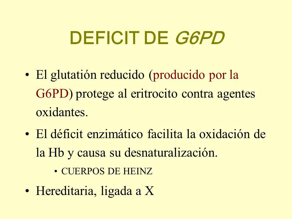 DEFICIT DE G6PD El glutatión reducido (producido por la G6PD) protege al eritrocito contra agentes oxidantes. El déficit enzimático facilita la oxidac
