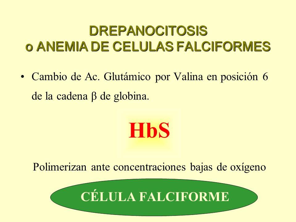 DREPANOCITOSIS o ANEMIA DE CELULAS FALCIFORMES Cambio de Ac. Glutámico por Valina en posición 6 de la cadena β de globina. HbS Polimerizan ante concen