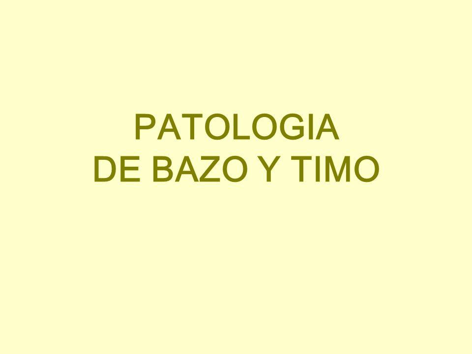 PATOLOGIA DE BAZO Y TIMO