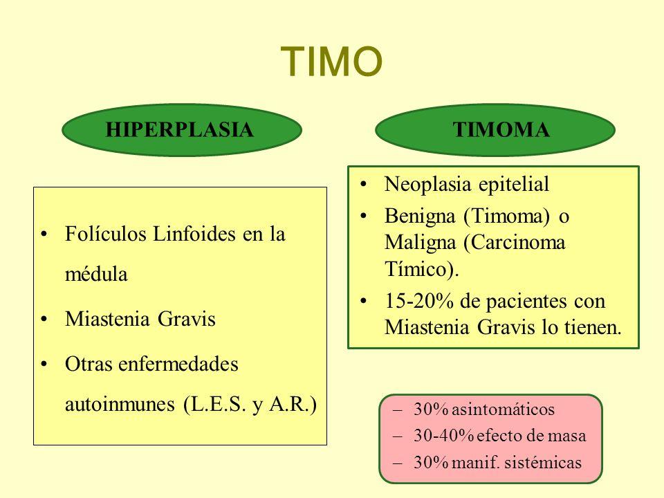 TIMO HIPERPLASIA Folículos Linfoides en la médula Miastenia Gravis Otras enfermedades autoinmunes (L.E.S. y A.R.) TIMOMA Neoplasia epitelial Benigna (