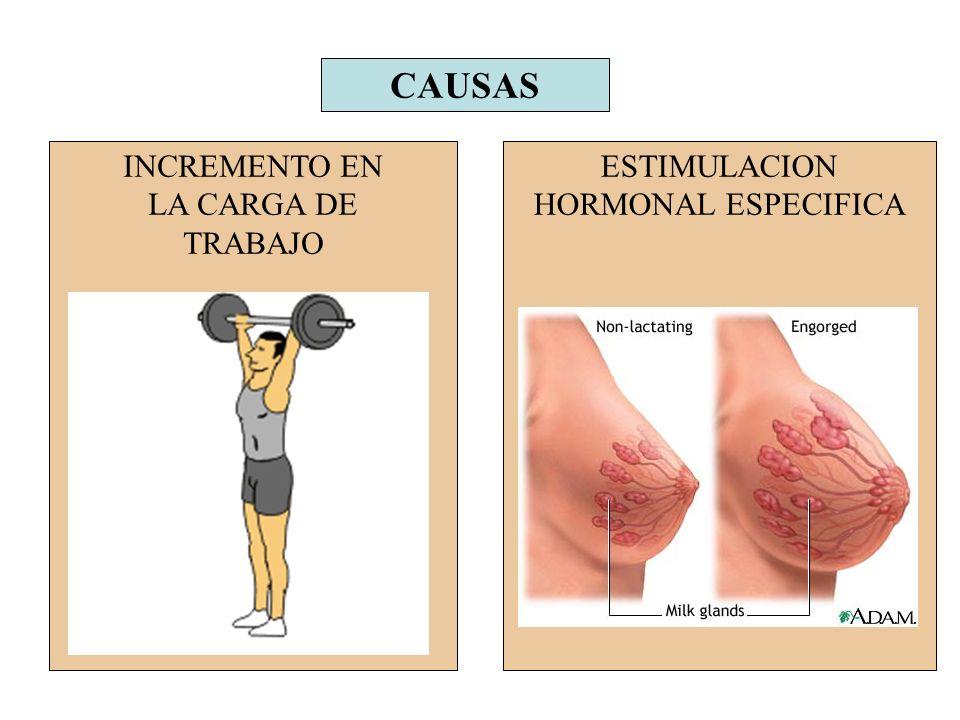 CAUSAS INCREMENTO EN LA CARGA DE TRABAJO ESTIMULACION HORMONAL ESPECIFICA