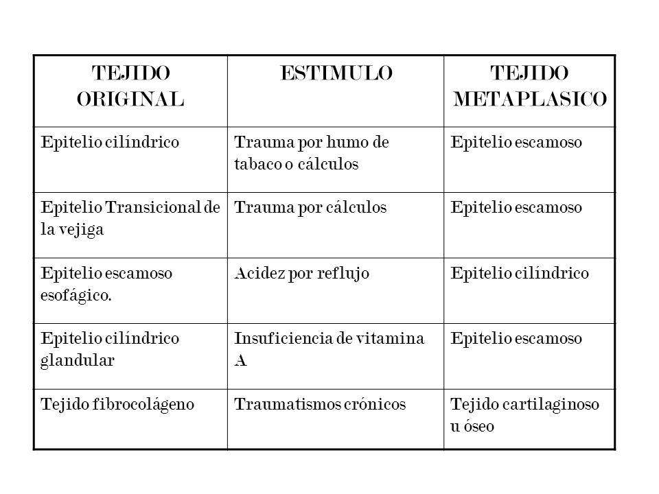 TEJIDO ORIGINAL ESTIMULOTEJIDO METAPLASICO Epitelio cilíndricoTrauma por humo de tabaco o cálculos Epitelio escamoso Epitelio Transicional de la vejig