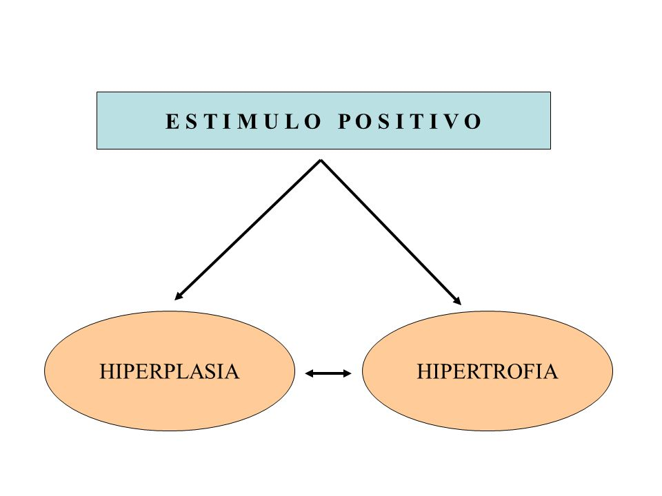HIPERPLASIA Incremento en el número de células de un órgano o tejido.