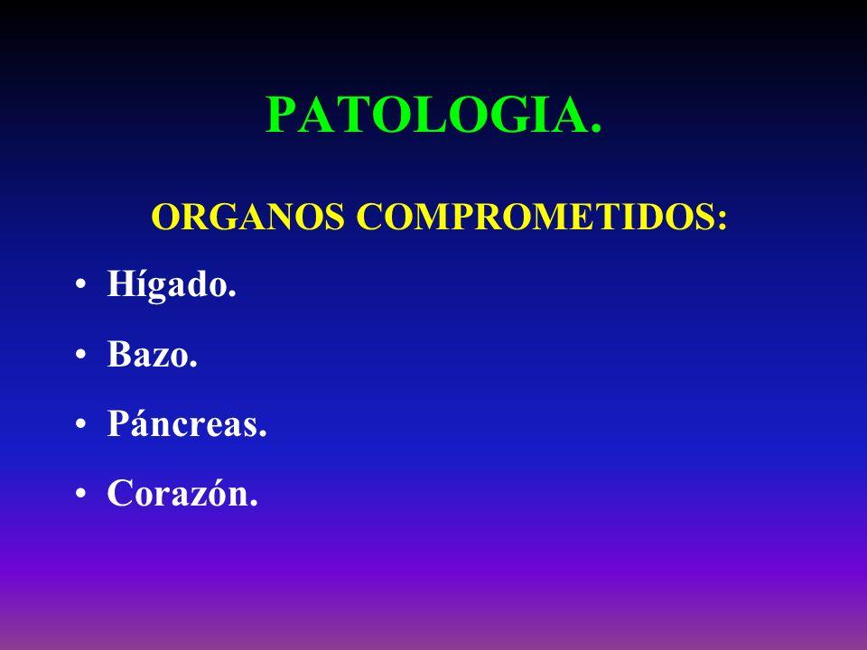 PATOLOGIA. ORGANOS COMPROMETIDOS: Hígado. Bazo. Páncreas. Corazón.