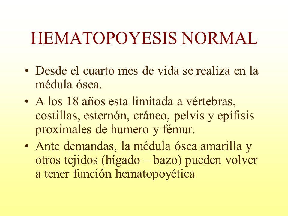 HEMATOPOYESIS NORMAL Desde el cuarto mes de vida se realiza en la médula ósea. A los 18 años esta limitada a vértebras, costillas, esternón, cráneo, p