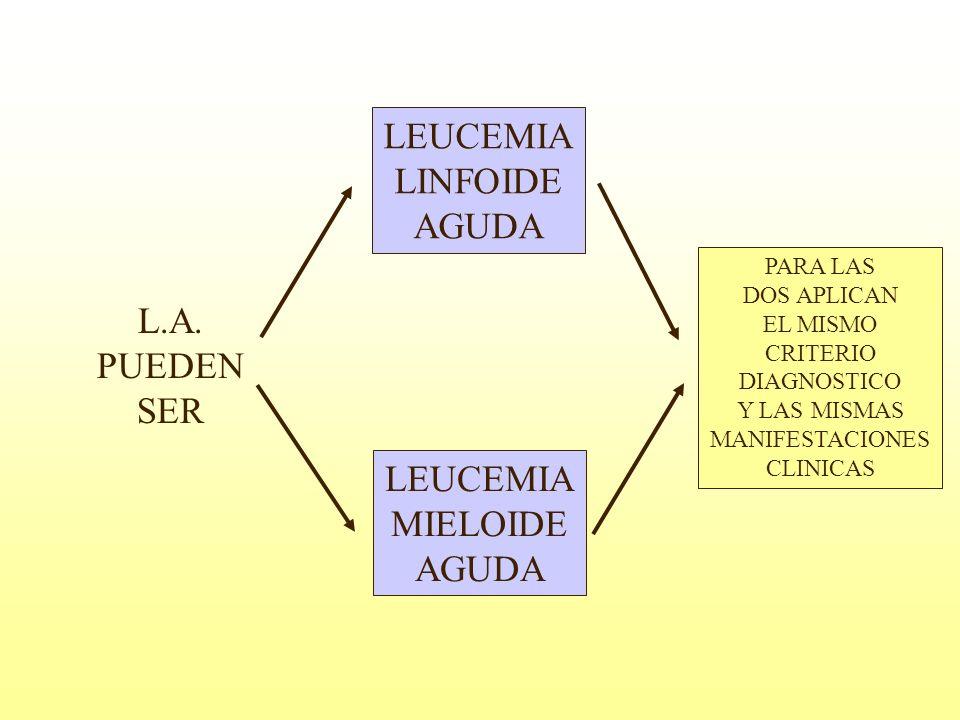 L.A. PUEDEN SER LEUCEMIA LINFOIDE AGUDA LEUCEMIA MIELOIDE AGUDA PARA LAS DOS APLICAN EL MISMO CRITERIO DIAGNOSTICO Y LAS MISMAS MANIFESTACIONES CLINIC