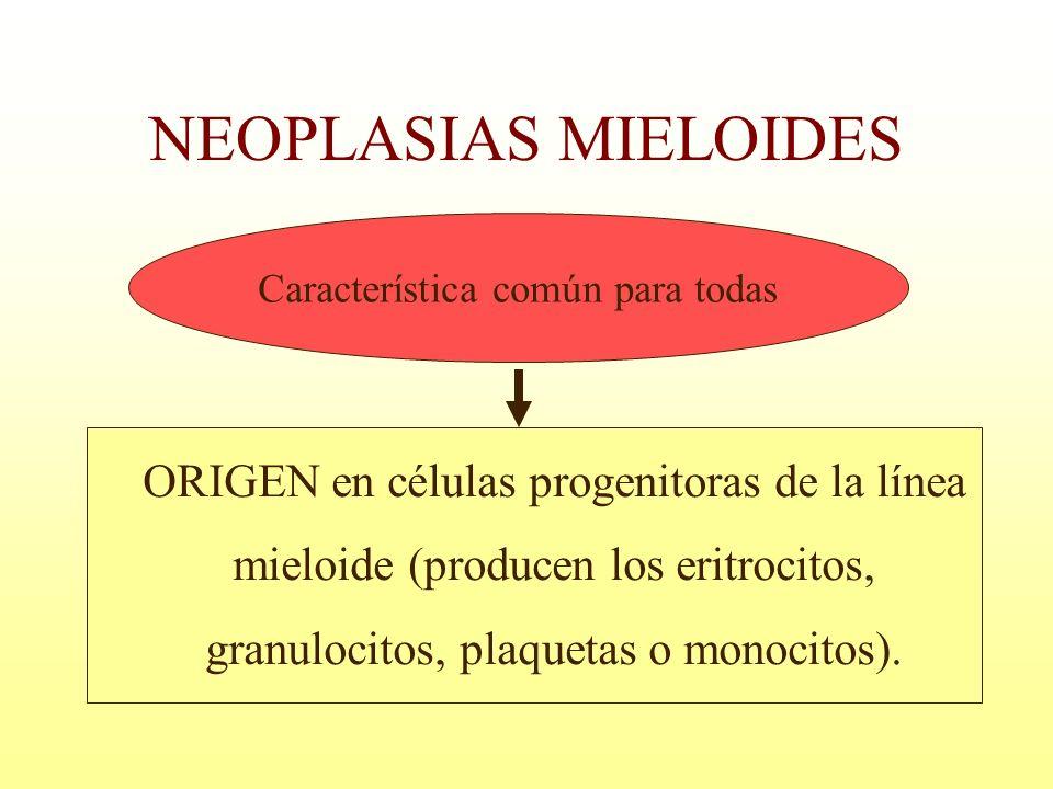 ORIGEN en células progenitoras de la línea mieloide (producen los eritrocitos, granulocitos, plaquetas o monocitos). Característica común para todas