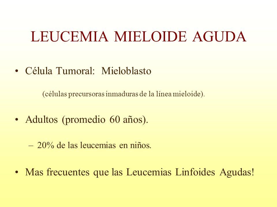 LEUCEMIA MIELOIDE AGUDA Célula Tumoral: Mieloblasto (células precursoras inmaduras de la línea mieloide). Adultos (promedio 60 años). –20% de las leuc