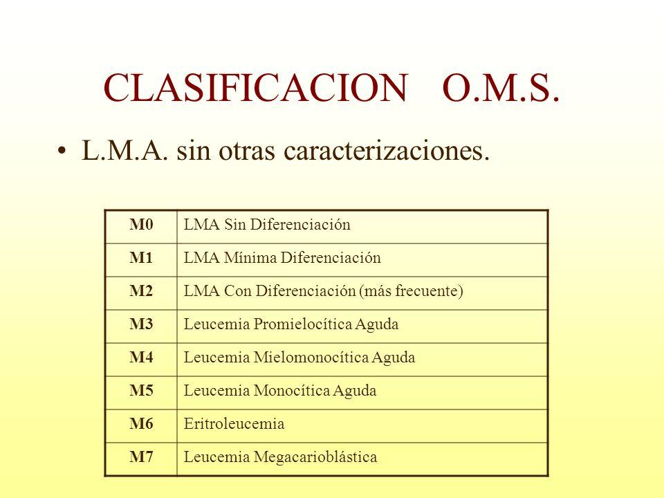 L.M.A. sin otras caracterizaciones. CLASIFICACION O.M.S. M0LMA Sin Diferenciación M1LMA Mínima Diferenciación M2LMA Con Diferenciación (más frecuente)