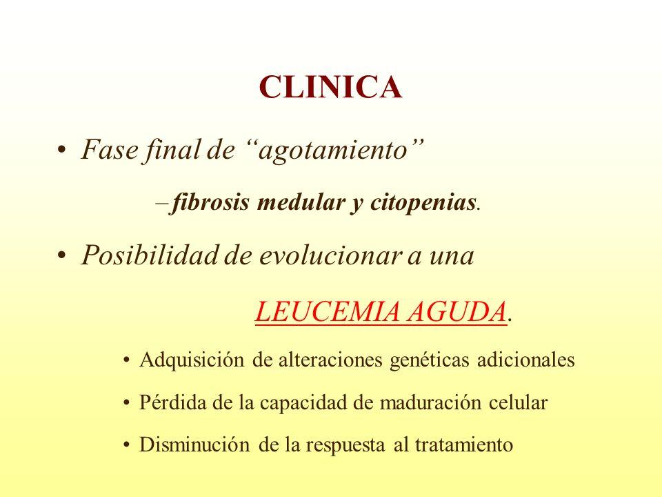 Fase final de agotamiento –fibrosis medular y citopenias. Posibilidad de evolucionar a una LEUCEMIA AGUDA. Adquisición de alteraciones genéticas adici