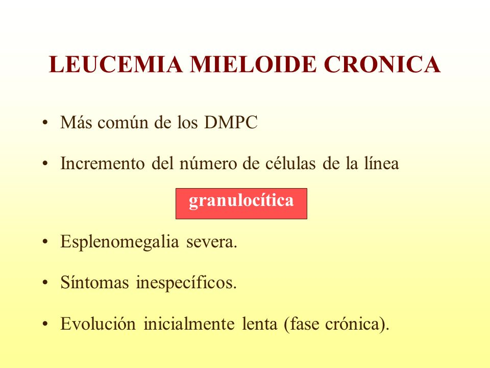 LEUCEMIA MIELOIDE CRONICA Más común de los DMPC Incremento del número de células de la línea granulocítica Esplenomegalia severa. Síntomas inespecífic