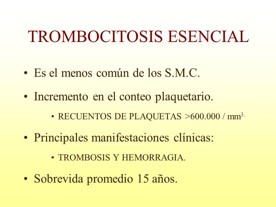 TROMBOCITOSIS ESENCIAL Es el menos común de los S.M.C. Incremento en el conteo plaquetario. RECUENTOS DE PLAQUETAS >600.000 / mm 3. Principales manife