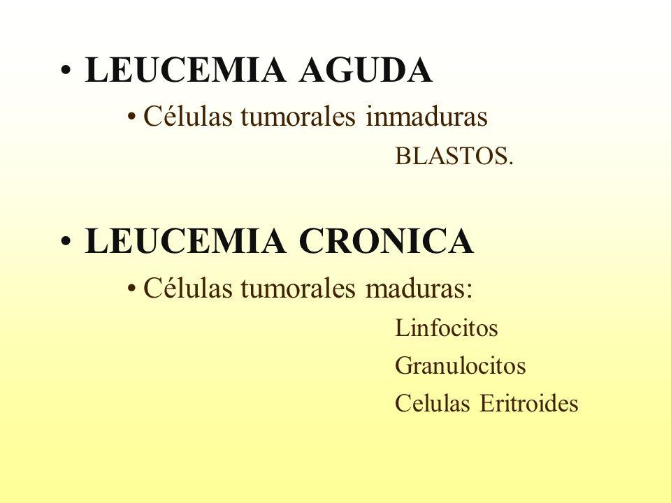 LEUCEMIA AGUDA Células tumorales inmaduras BLASTOS. LEUCEMIA CRONICA Células tumorales maduras: Linfocitos Granulocitos Celulas Eritroides