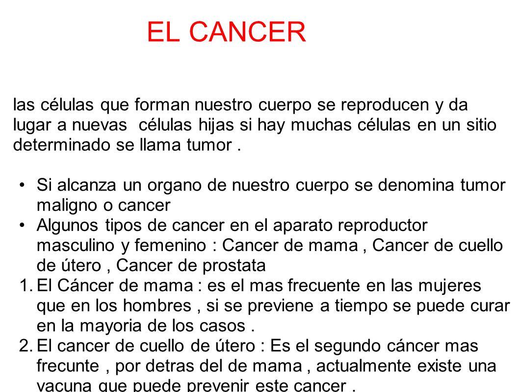 EL CANCER las células que forman nuestro cuerpo se reproducen y da lugar a nuevas células hijas si hay muchas células en un sitio determinado se llama