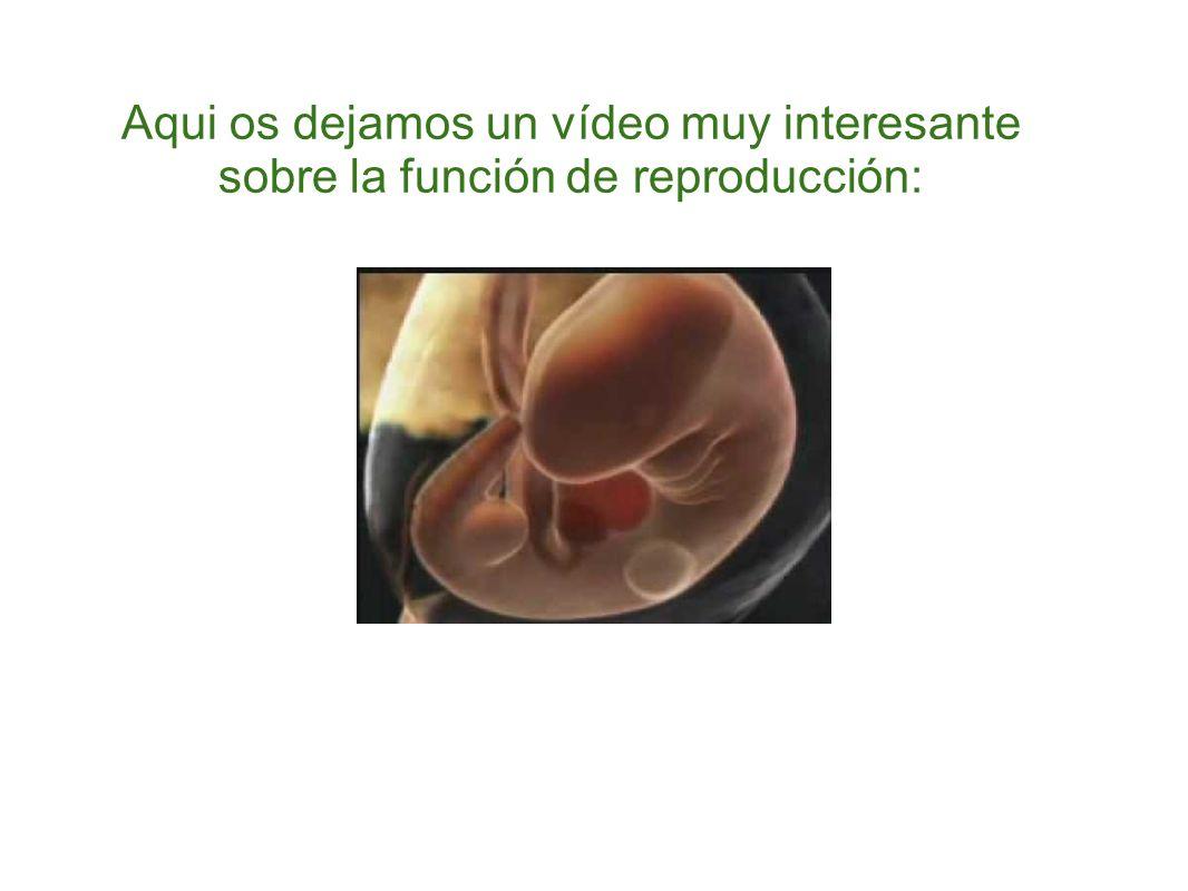 Aqui os dejamos un vídeo muy interesante sobre la función de reproducción: