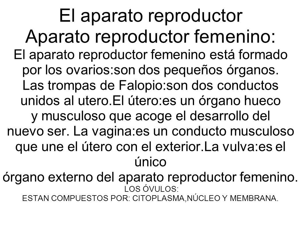El aparato reproductor Aparato reproductor femenino: El aparato reproductor femenino está formado por los ovarios:son dos pequeños órganos. Las trompa