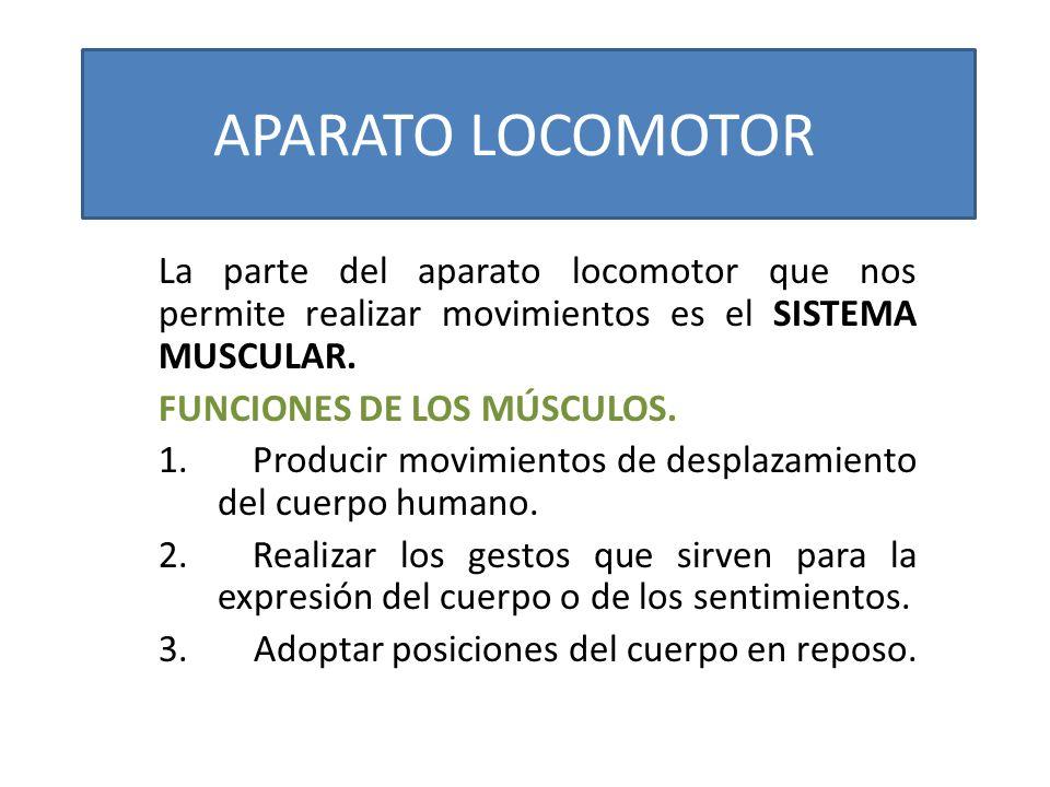 APARATO LOCOMOTOR La parte del aparato locomotor que nos permite realizar movimientos es el SISTEMA MUSCULAR. FUNCIONES DE LOS MÚSCULOS. 1. Producir m
