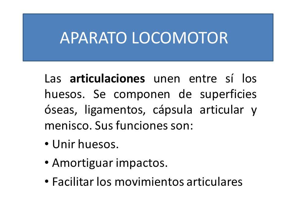 APARATO LOCOMOTOR Las articulaciones unen entre sí los huesos. Se componen de superficies óseas, ligamentos, cápsula articular y menisco. Sus funcione