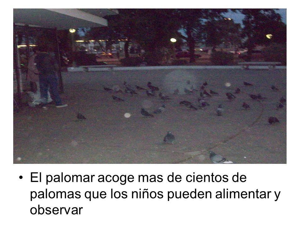 El palomar acoge mas de cientos de palomas que los niños pueden alimentar y observar