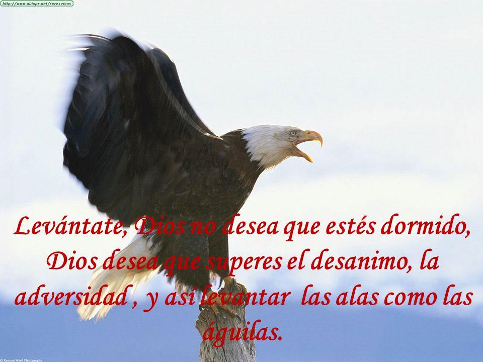 Levántate, Dios no desea que estés dormido, Dios desea que superes el desanimo, la adversidad, y así levantar las alas como las águilas.