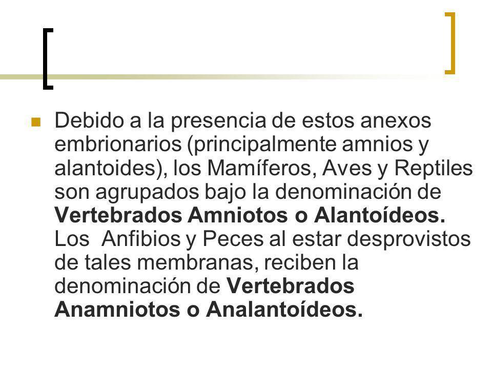 Debido a la presencia de estos anexos embrionarios (principalmente amnios y alantoides), los Mamíferos, Aves y Reptiles son agrupados bajo la denomina