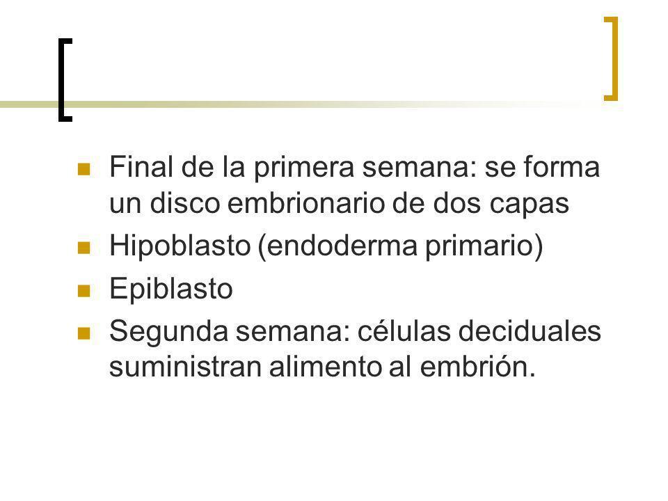 Final de la primera semana: se forma un disco embrionario de dos capas Hipoblasto (endoderma primario) Epiblasto Segunda semana: células deciduales su